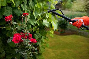 lawn-ornamentals-command-best pest control company
