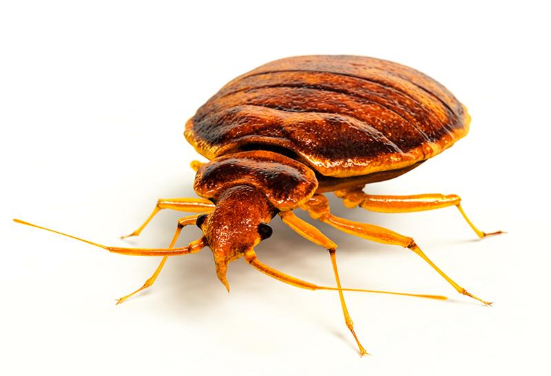 Pest Infestation Prevention | Command Pest Control Service