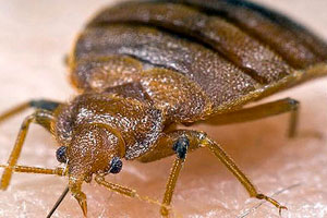 Kill Bed Bugs in Homes | Bed Bug Prevention