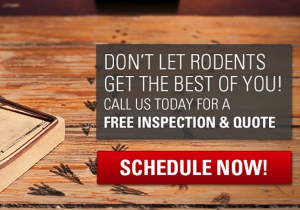 schedule an appointment for local pest control services