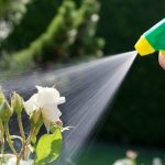 Pest Control Fort Lauderdale | Command Pest Control