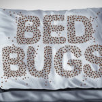 prevent bed bugs in south florida, pest control pompano beach