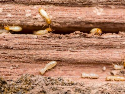 6 Signs You Have a Termite Problem, termite tenting, pest control south florida