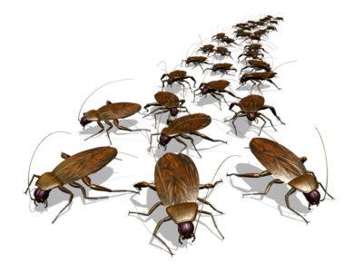 cockroach infestation south florida, pest control ft lauderdale, command pest control