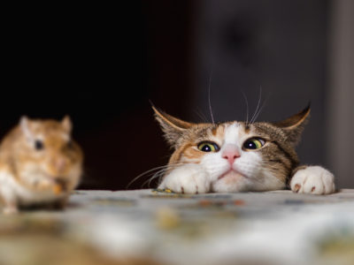 Are People Using Cats as Pest Control?, pest control south florida