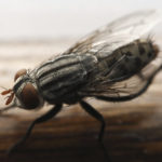 5 Telltale Signs You Need White Fly Pest Control Services, south florida pest control