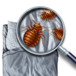 where do bed bugs hide, pest control near me
