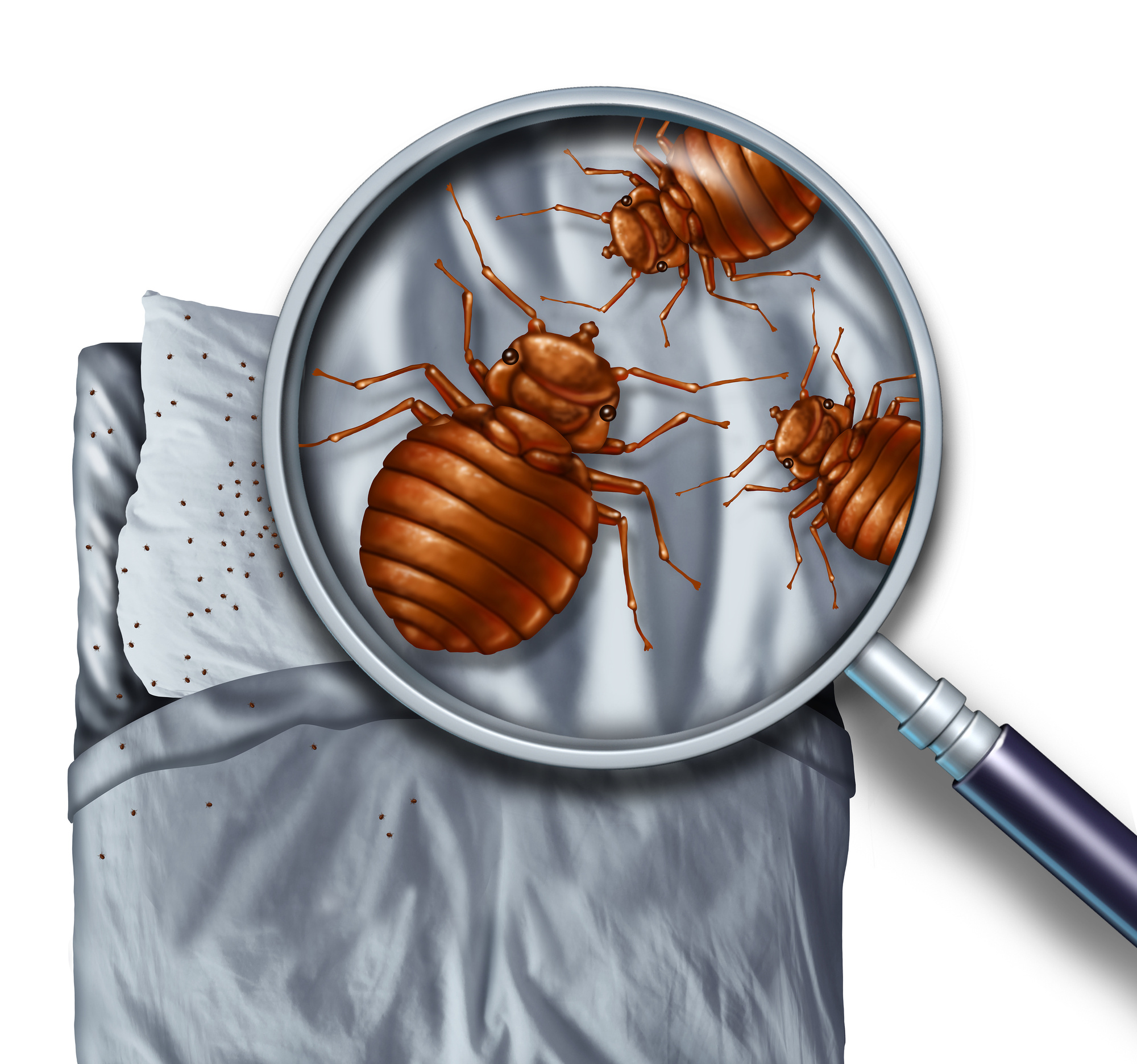 Signs You Have Bed Bugs | Bed Bug Pest Control