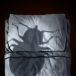 south florida pest control, bed bug treatment