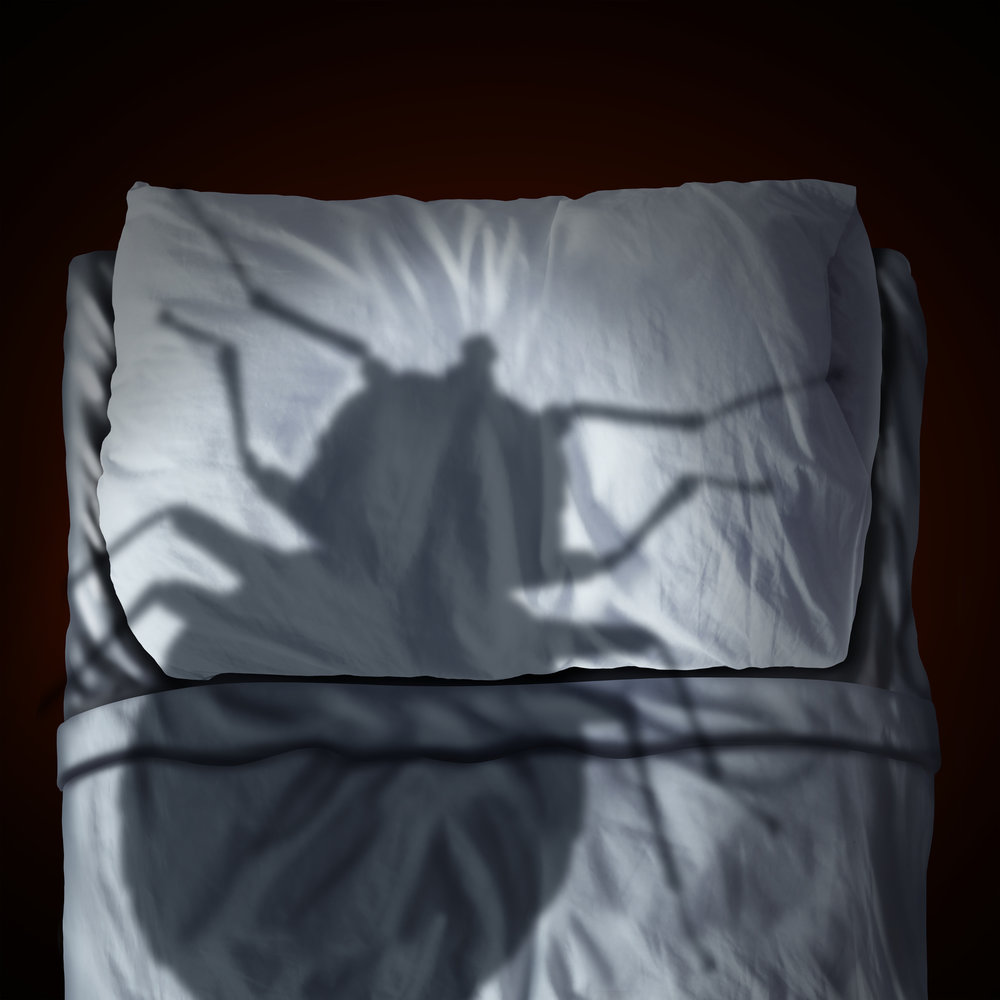 Signs You Have Bed Bugs | Dont Confuse Bed Bug Droppings