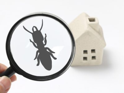 What Can Cause a Termite Infestation?