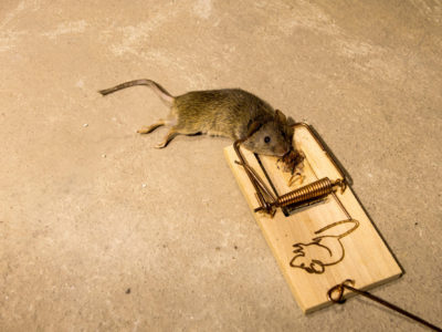 A Floridian's Guide to Dealing With a Rodent Infestation