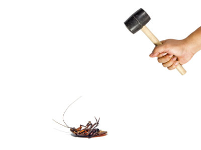How to Get Rid of Cockroaches Infesting Your Home