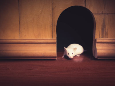 Protect Your House: 10 Rodent Infestation Control Tips