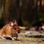 8 Types of Rodents and How to Get Rid of Them