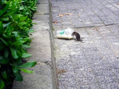 Top 5 Rodent Repellents for the Home