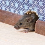 A Complete Mouse Identification Guide