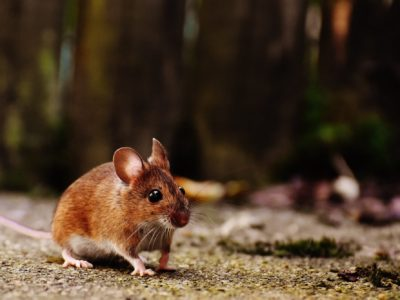 8 Foods that Attract Mice and More