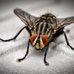 What to Consider When Hiring Professional Pest Control
