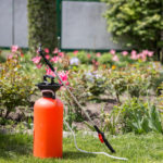 Top Reasons You Need Lawn Pest Control