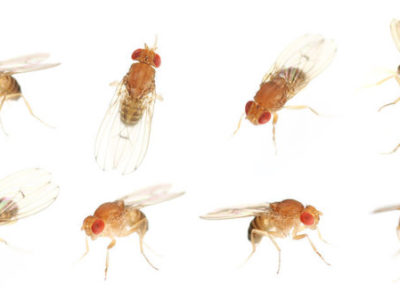 How to Get Rid of Fruit Flies | Pest Control in South Florida