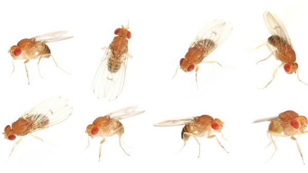 How to get rid of fruit flies in South Florida