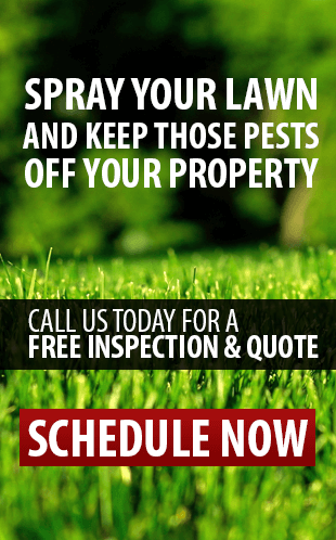 Pest Control Pompano Beach | Spray Your Lawn